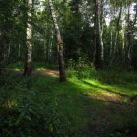 Зеленое царство :: Андрей Лукьянов
