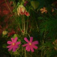 цветы в саду :: Лариса *