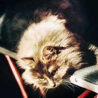 В лучах солнца :: Larissa
