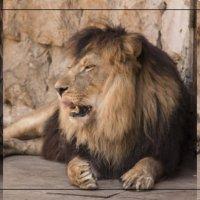 Zoo :: Эмиль Абд