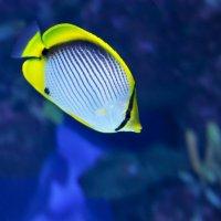Рыбка :: Grishkov S.M.