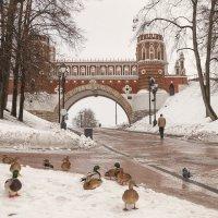 Местные жители :: Марина Назарова