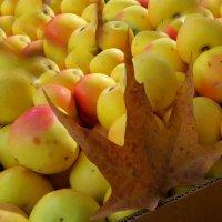 С Яблочным спасом! С Яблочным спасом! :: Наталья (D.Nat@lia)