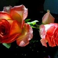 Две мокреньких розы :) :: Милла Корн