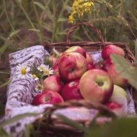 Яблочки :: Ольга Токмакова