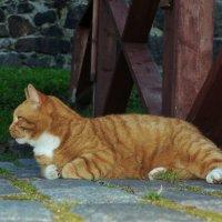 Кот Филимон.. смотритель Выборгского замка.) :: tipchik