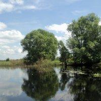 Однажды речкой я плыла... :: Ольга Кривых