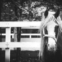 Стильная лошадка) :: Ольга Перевалова