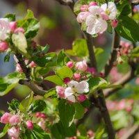 Весна... :: Светлана Королева