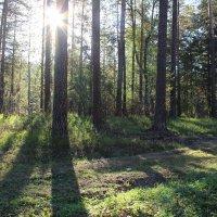 Утро в лесу :: Тыртышных Светлана