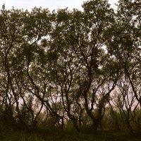 Пьяный лес :: Роберт Гресь