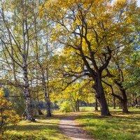 Осенний этюд в парке :: Виталий