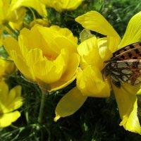 Весенние цветы :: Елена *