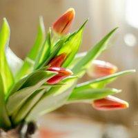 Друзья, доброго утра и хорошего дня! :: Tatyana Belova