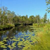 Протока из озера Тенис в озеро Менгалы :: Евгений Золотаев