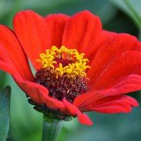 Красный цветок :: Борис Русаков