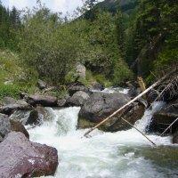 Река Чуя, Горный Алтай. :: Александр Бормотов