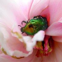 добрый жук... :: Екатерина и Иван Гирда
