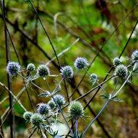 луговые травы :: Александр Прокудин