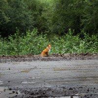 встреча на дороге :: Наталья Литвинчук
