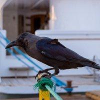 Птица :: Павел Кореньков