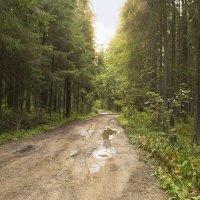 Лесная дорога :: Aнна Зарубина