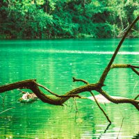 Дерево над озером :: Любомир Дужак