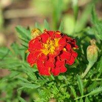 ...городские цветы... :: Геннадий Александрович
