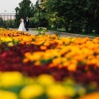 свадьба :: Константин Гусев