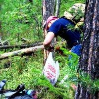 Алексей собирает грибы в тайге :: Иван