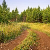 Сквозь лиственничный лес :: Любовь Потеряхина