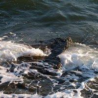 Бурлит,клокочет море Азовское! :: Наталья