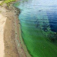 Волга зацвела... :: татьяна петракова