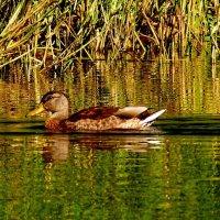по зеленой глади озера :: Александр Прокудин