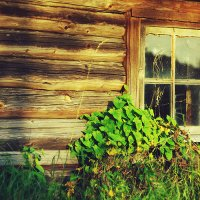 "Из серии ""окна"".... :: Marika Hexe"
