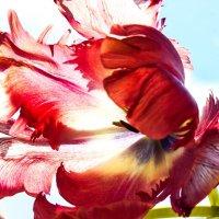Цветок :: Светлана Щербакова