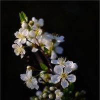Весна :: Вероника Саркисян