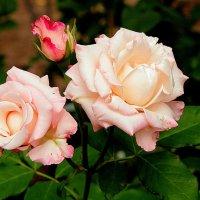 В саду. :: Larisa