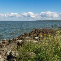 Куршский залив :: Игорь Вишняков