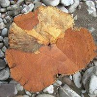 Рисунок на спиле дерева :: Надежда