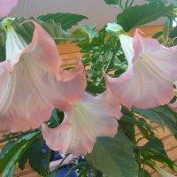 Неизвестный цветок (вид с другого ракурса) :: Надежда
