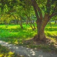 волшебный сад :: Света Кондрашова