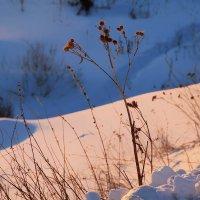 Былинки на закате :: Екатерина Торганская