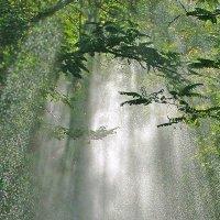 солнечный дождь :: viton