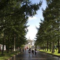 После дождя :: Александр Школьник