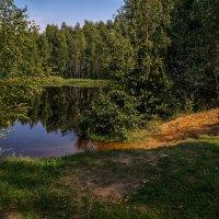 Август озеро в лесу 3 :: Андрей Дворников