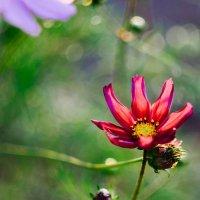 В цветках не разбираюсь, может кто подскажет название ? :: Сергей Алексеев