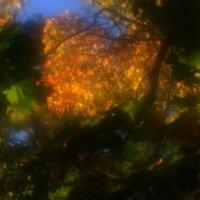 И  все  же  осень..... :: Валерия  Полещикова