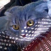 Кошка :: Наталия Каминская