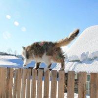 Кошачий март в деревне :: Екатерина Торганская